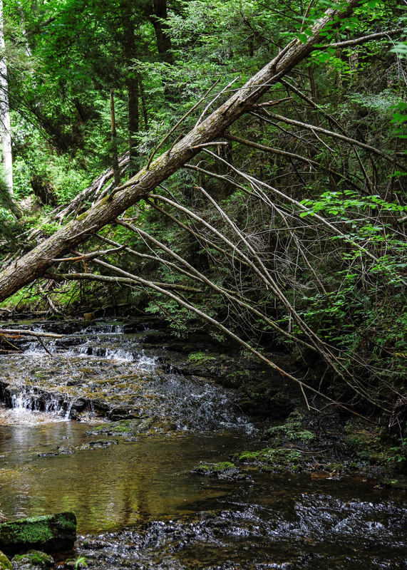 North Loop Of Carmac Falls Photography Art | N2 the Woods Photography