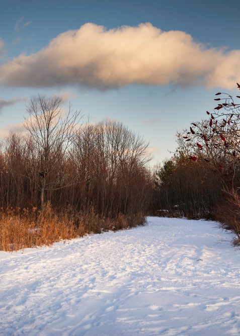 Winter Walk Photography Art | Elizabeth Stanton Photography