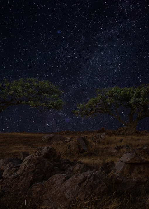 Starry Oak Solitude Photography Art   Josh Kimball Photography