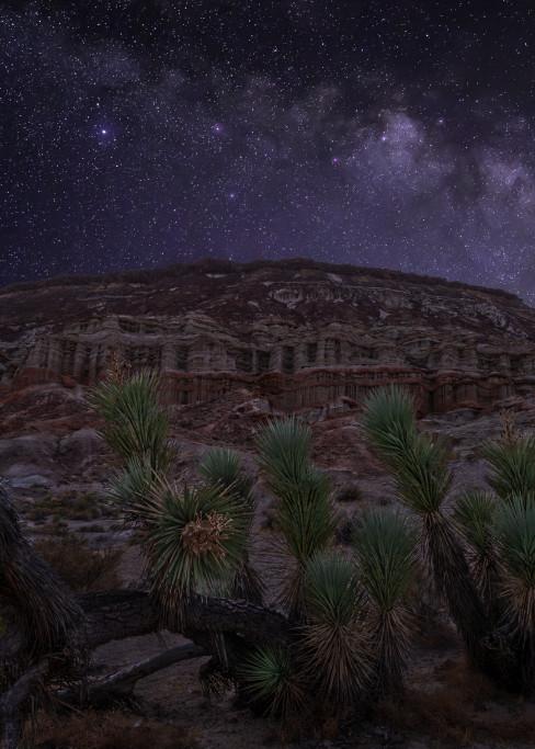 Joshua Tree Starscape Photography Art | Josh Kimball Photography