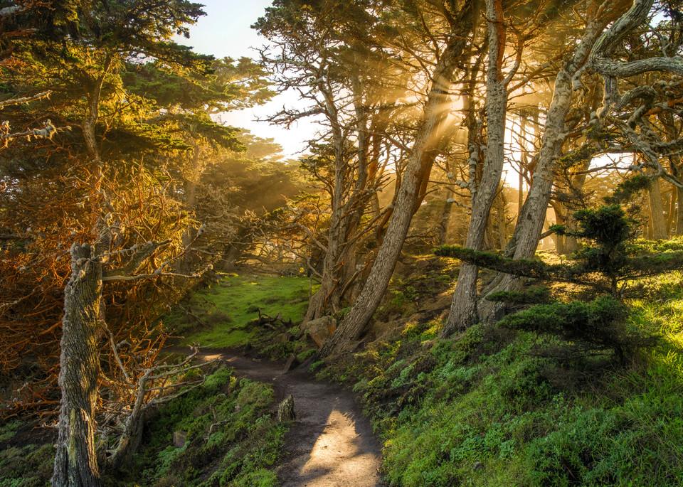 Enchanted at Point Lobos