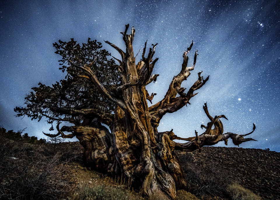 Timeless in Ancient Bristlecone Pine Forest