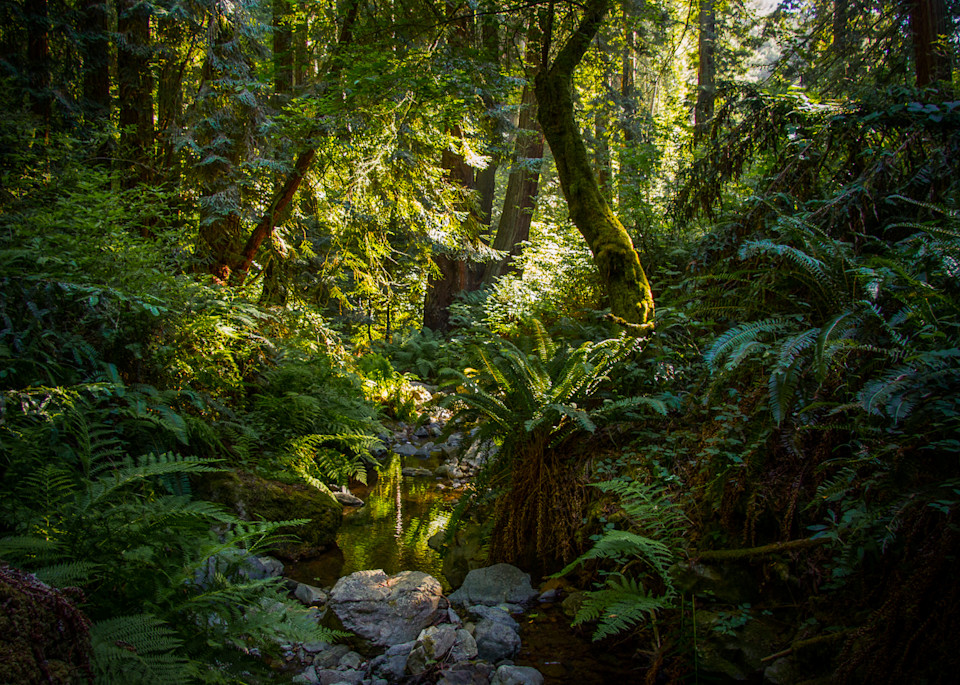 Landscape, Photography, steep ravine, California, Marin County, forest