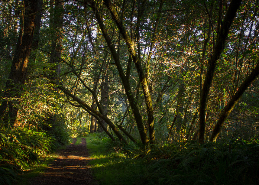 Photography, Pt. Reyes, California, forest, landscape, Marin County
