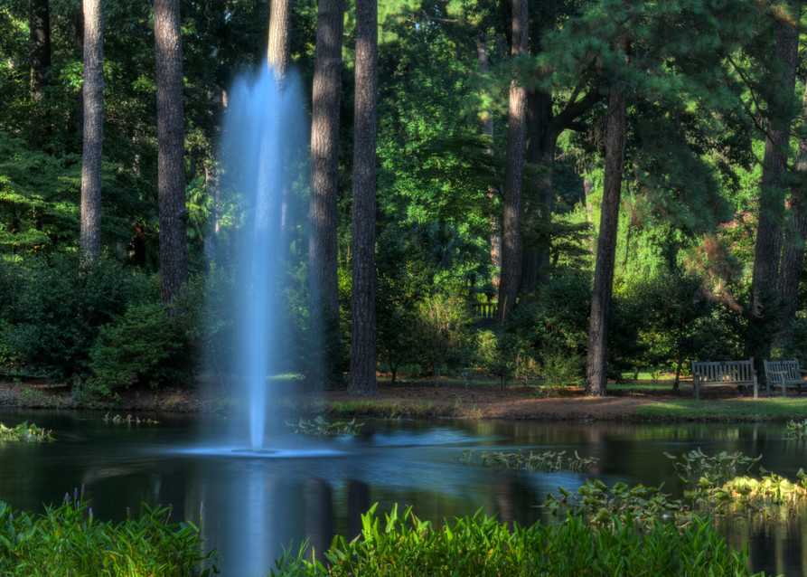 Norfolk Forest Reflection Fine Art Photograph by Michael Pucciarelli