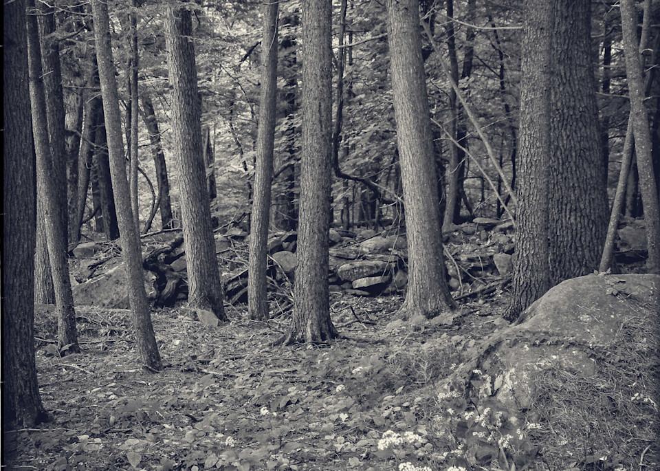 Eleven Trees   Woodstock, Ny Photography Art | David Frank Photography