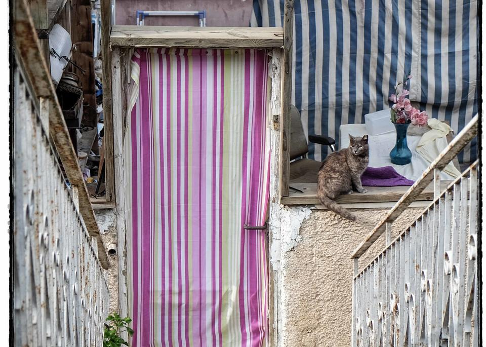 Jerusalem Of Cats Photography Art | David Frank Photography