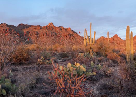 Desert Sunset Pano, Tucson, Arizona