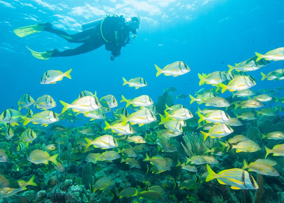 Grunts, Porkfish & Diver, Gardens of the Queen, Cuba