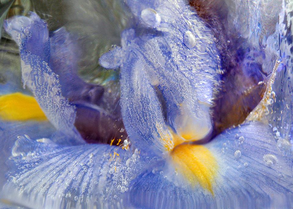 Icescape Blue Iris Art | Fine Art New Mexico