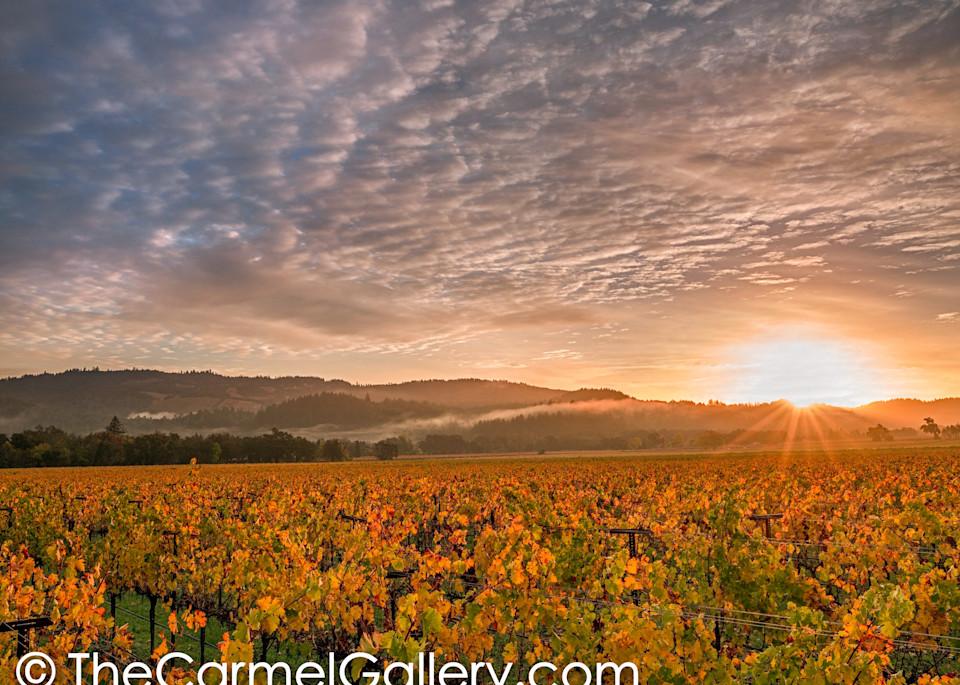 Autumn Sunrise, Napa Valley