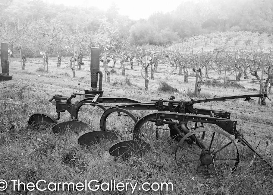 Early Farm Vineyard BW