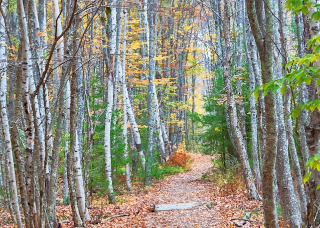 Autumn Grove Path