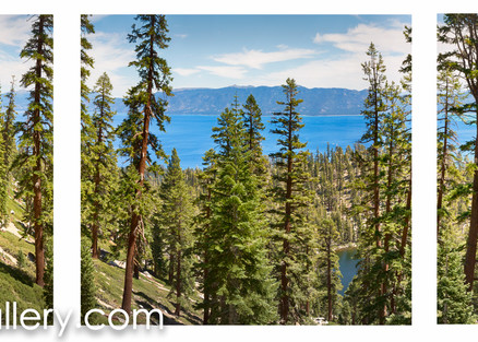 Tahoe Forest Panorama ALL