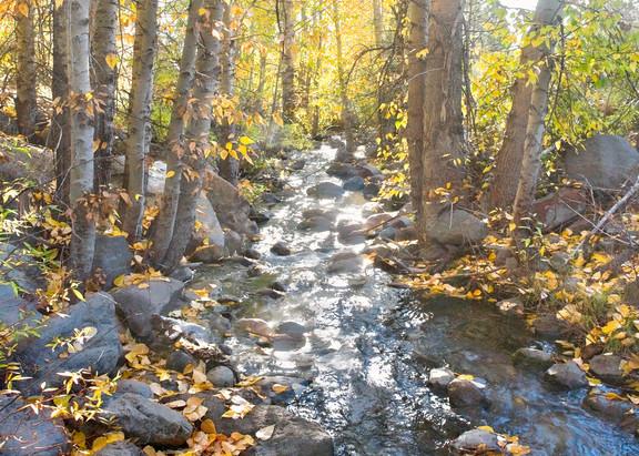 Misty Morning Trout Creek