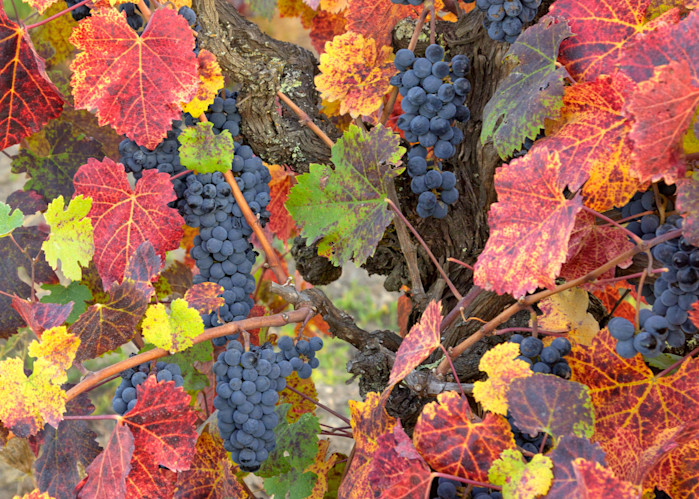 Wild Vines Wine Country II