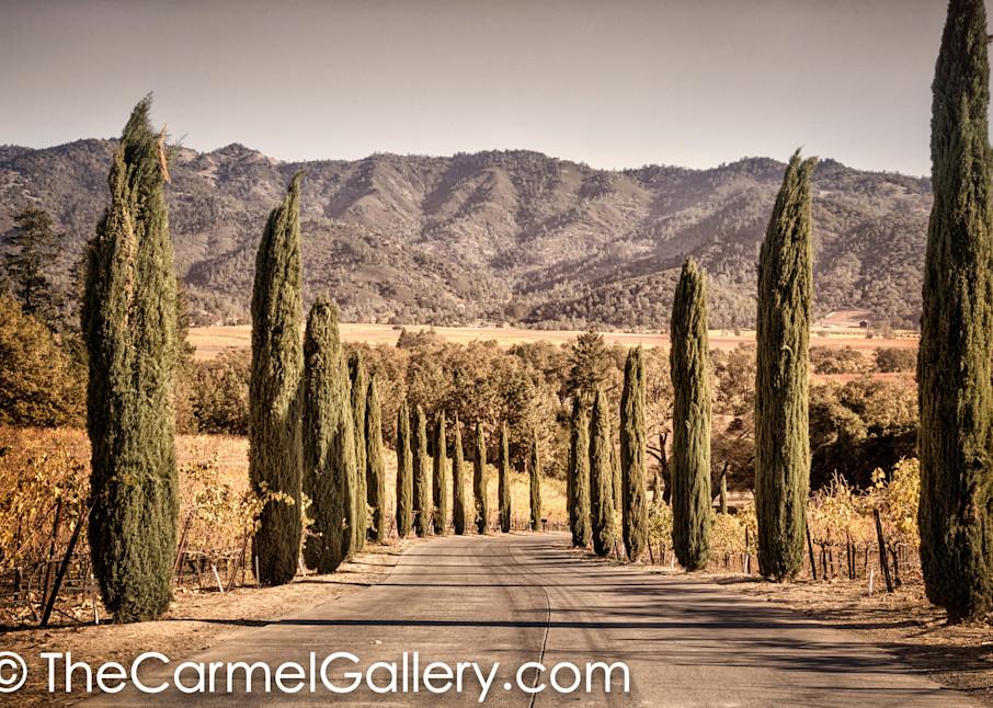 Cypress Road Napa Valley