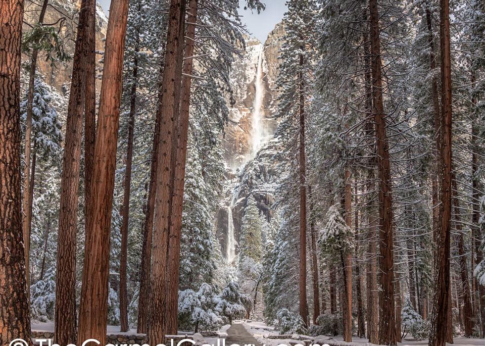 A Walk in Winter