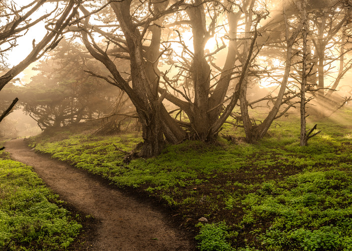 Re-enchanted along Point Lobos
