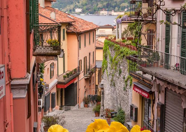 Bellagio Bloom Art   The Carmel Gallery