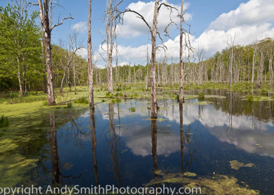 Northwest NJ, swamp, Peter's Valley, fine art photograph