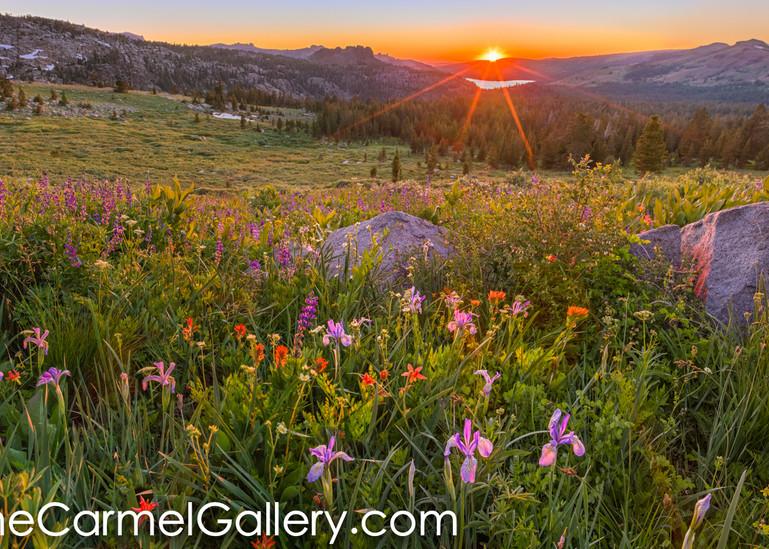 Wildflower Panorama Art | The Carmel Gallery