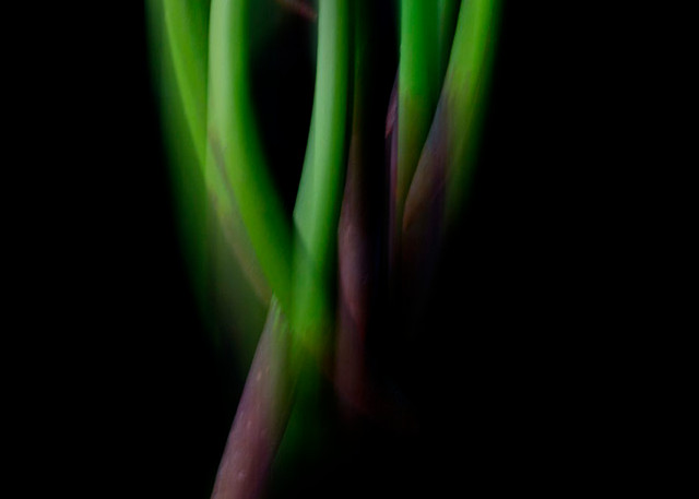 Constance Mier Photography - art in nature