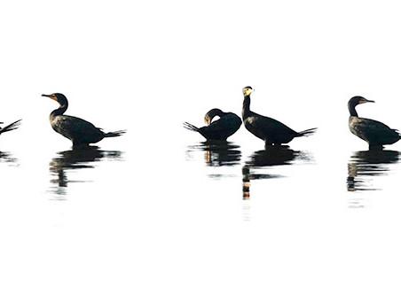 Constance Mier Photography - birds