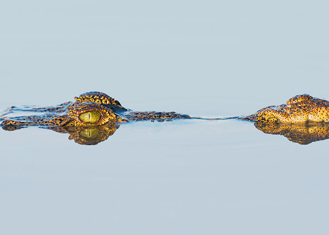 Constance Mier Photography - animals