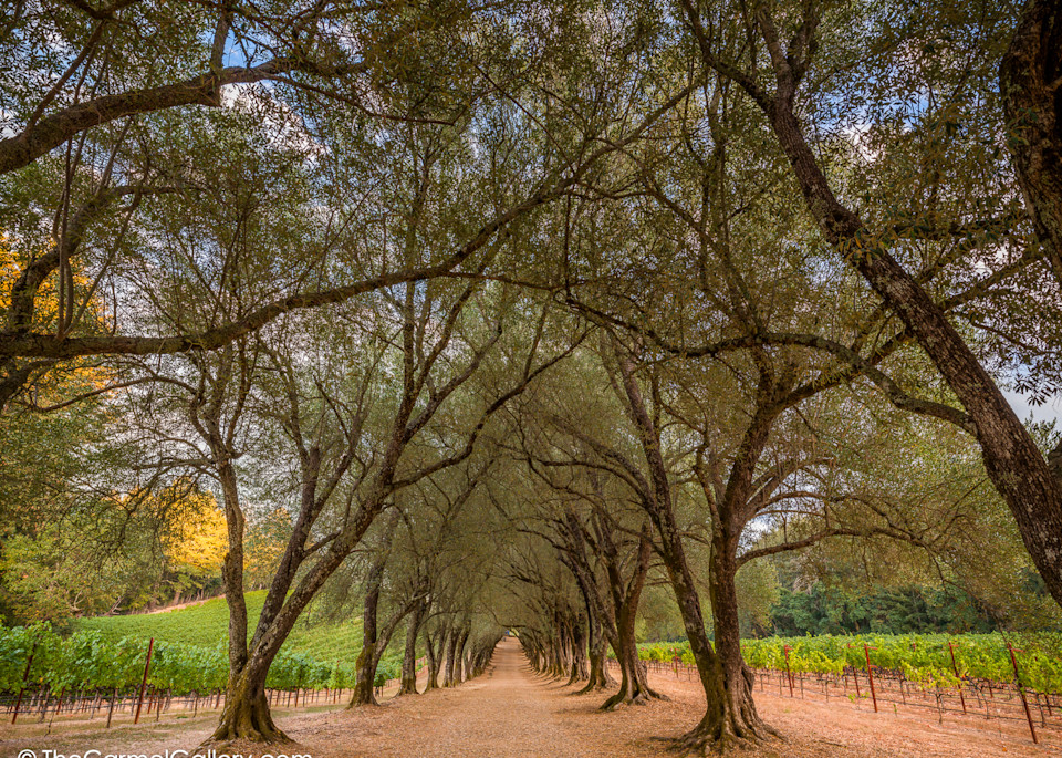Wine Country Passage Art | The Carmel Gallery