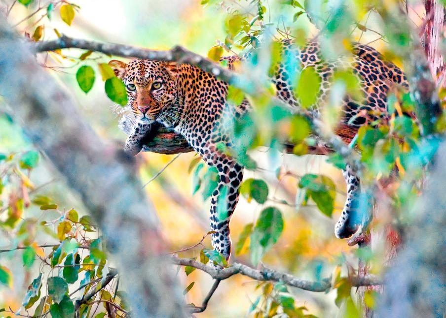 Leopards 009 Photography Art   Cheng Yan Studio