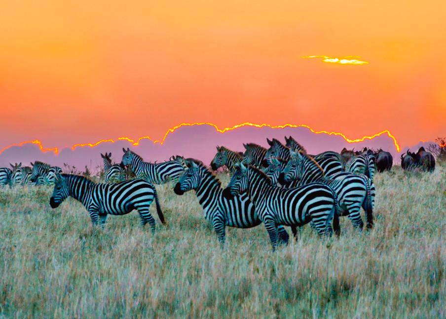 Zebras 005 Photography Art | Cheng Yan Studio