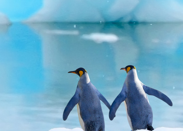 Penguins 009 Photography Art | Cheng Yan Studio