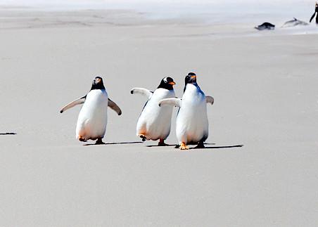Penguins 017 Photography Art | Cheng Yan Studio