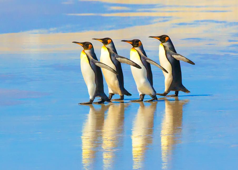 Penguins 022 Photography Art | Cheng Yan Studio