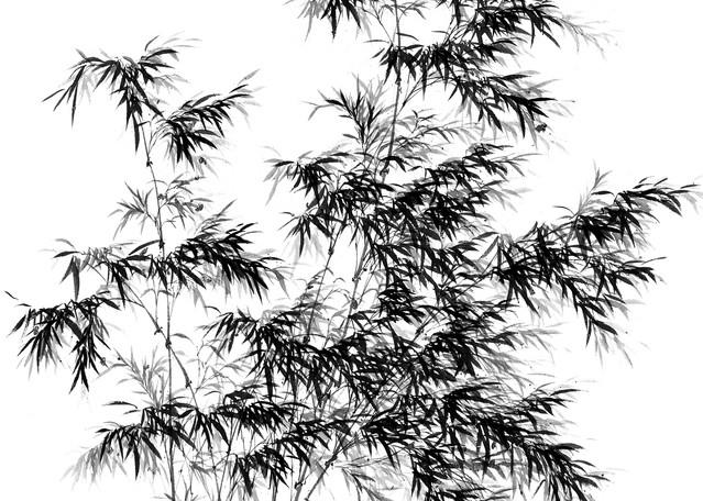 Bamboo 005 Photography Art   Cheng Yan Studio