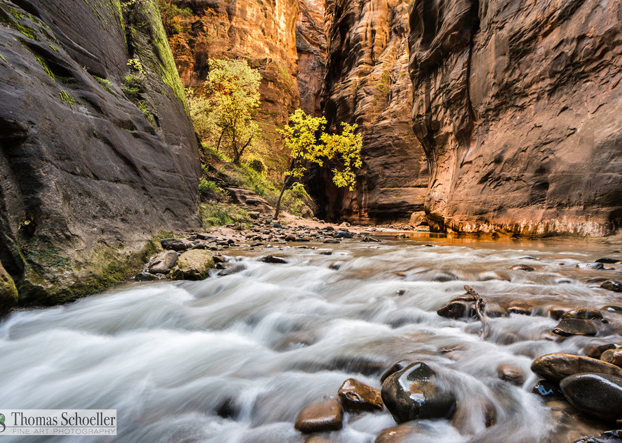 Titled Enlightened, The wild rapids within the Zion River Narrows cut their way through the reflective desert sandstone/Fine Art prints