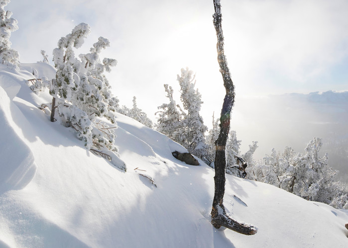 Lightning Tree, Lake Tahoe winter photo print