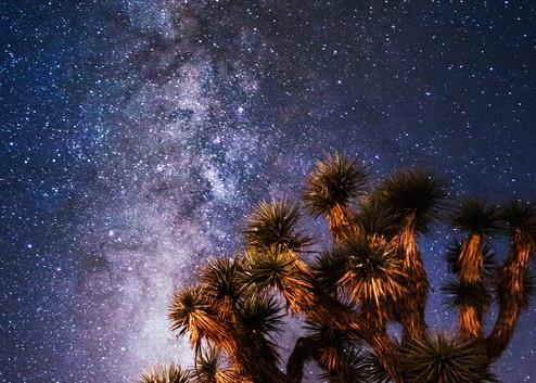 Blooming Under The Stars, Joshua Tree Night Photo