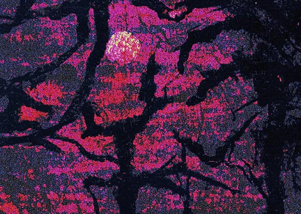 Forest Of The Night Art | ArtfulPrint