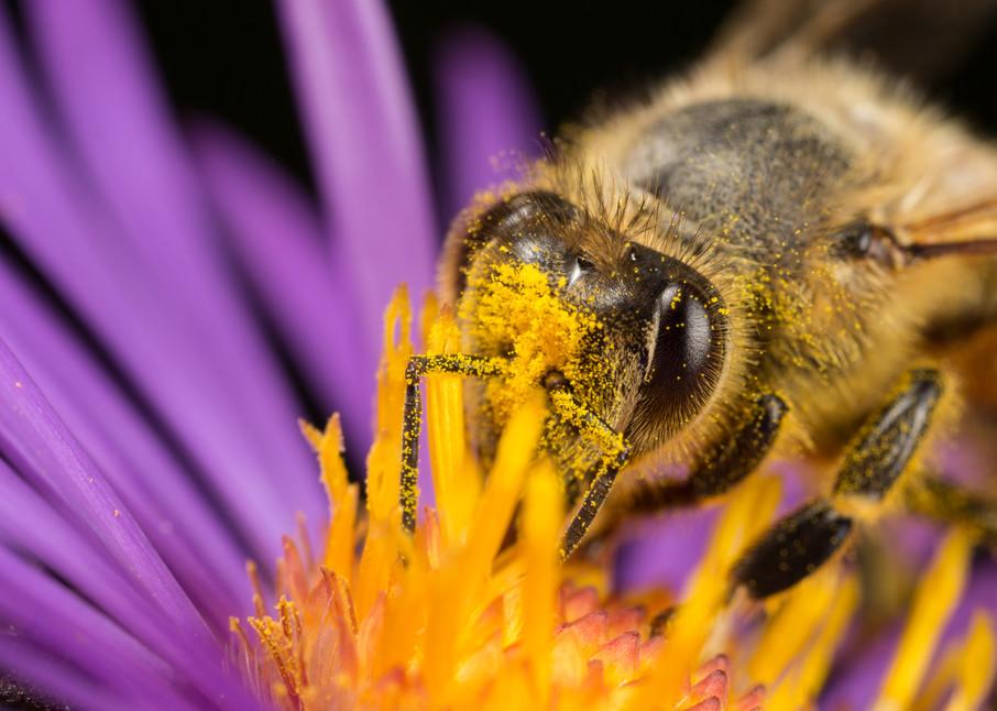 Honey bee #2