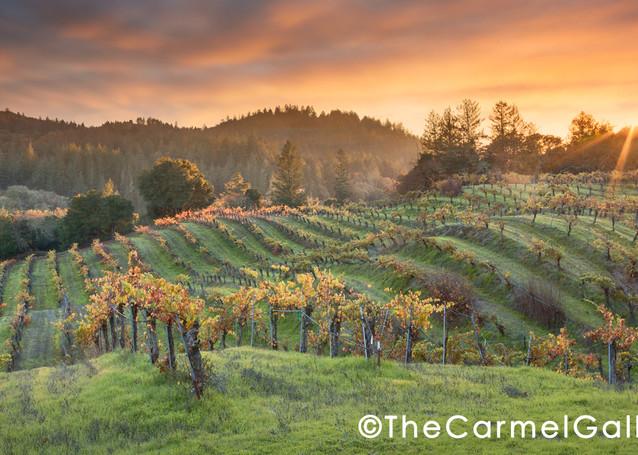 """Autumn Sunset Hans Fahden"" | Wine Country fine art photography prints by Olof Carmel, The Carmel Gallery"