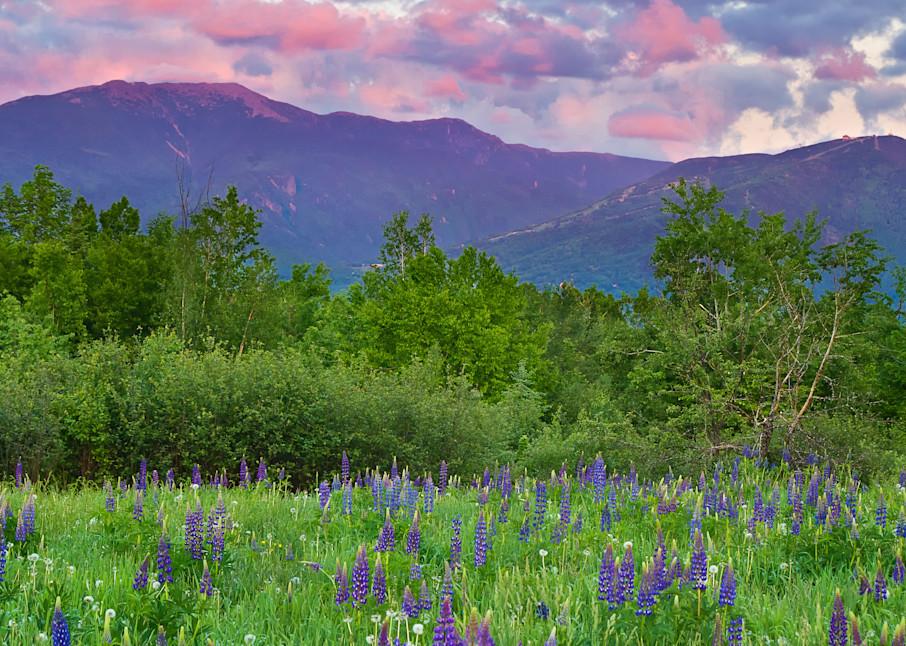 """Lupine Sunset"" Fine art Sugar Hill, New Hampshire mountains photograph"