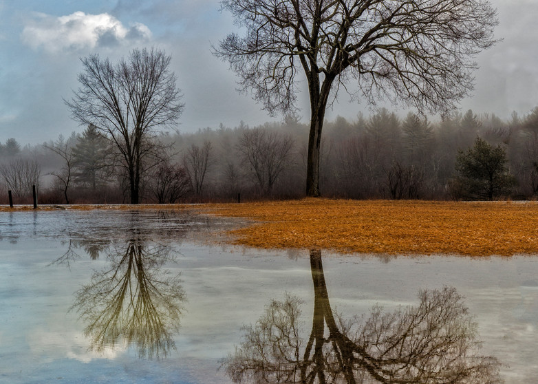 Trees and reflections in Spring Thaw