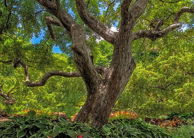 Summer Crabapples in Prescott Park