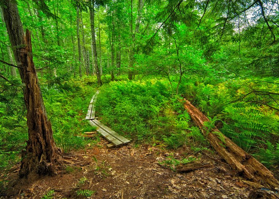 The beginning of the Cedar Swamp trail, Antrim, NH