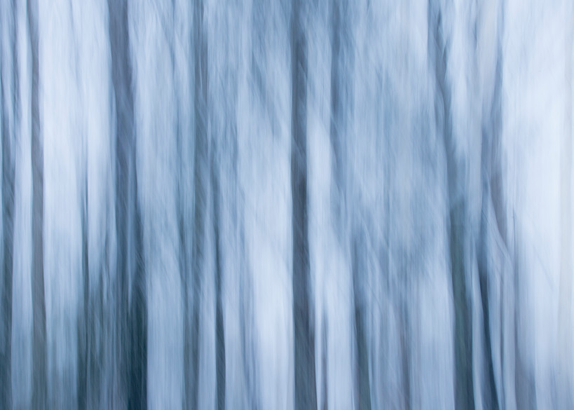 Pine grove in snow abstract