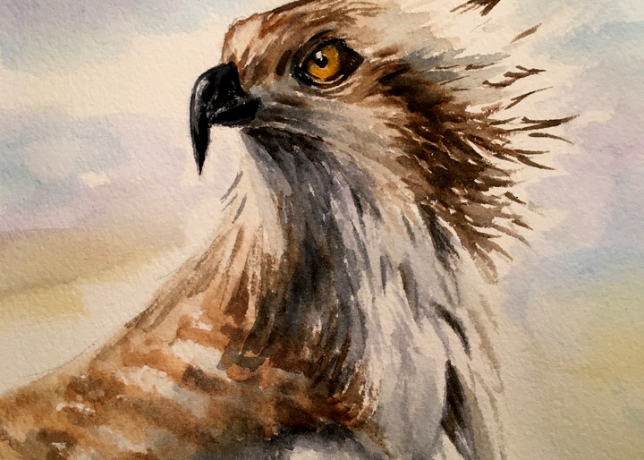Wet Osprey Art | Holly Whiting Art