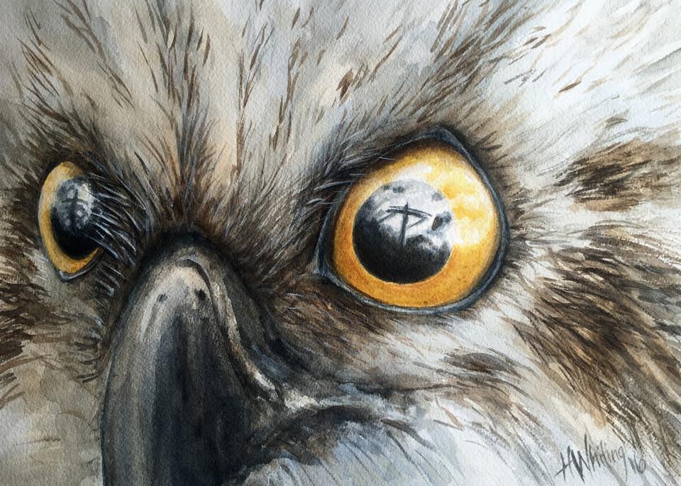 Painting of osprey eyes, face, eye reflection