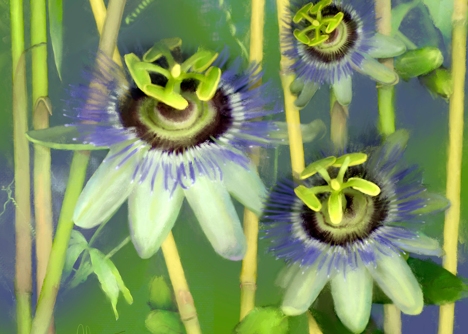 Passion Flowers with Bamboo, wall art. A print of an original painting by the artist, Mary Ahern.